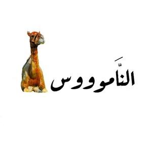 Drivu الناموووس Al Namooos
