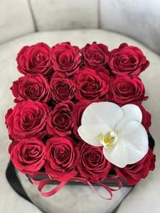 Drivu Red Elegance (S)