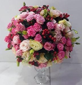 Drivu Precious Beauty Signature Collection