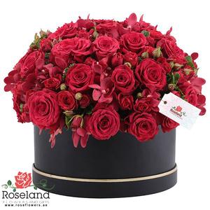 Drivu Forever Love Box