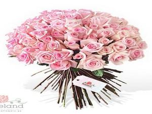 Drivu 25 Stem Pink Rose Bouquet