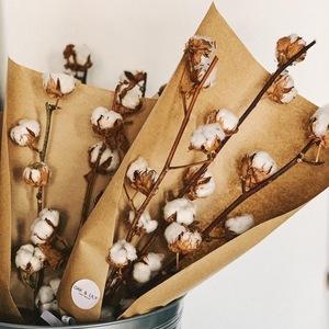 Drivu  Cotton