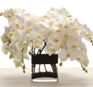 Drivu Phalaenopsis Orchid Vase