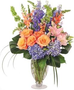 Drivu Purple Gift