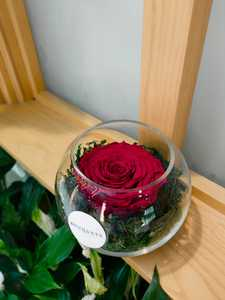 Drivu Infinity Red Rose 1 Stem