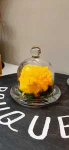 Drivu Yellow Infinity Rose