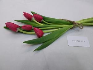 Drivu Red Tulips Stems