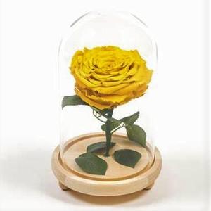 Drivu Ecuador Natural Yellow Infinity Rose
