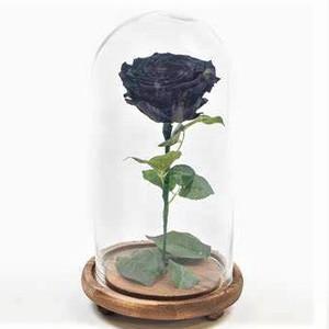 Drivu Ecuador Natural Black Infinity Rose