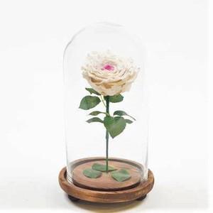 Drivu Ecuador Natural White Infinity Rose