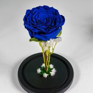 Drivu Ecuador Natural Blue Infinity Rose