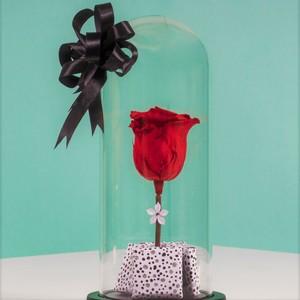 Drivu Ecuador Natural Red Infinity Rose